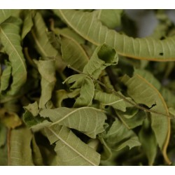 LEMON VERBENA BIO
